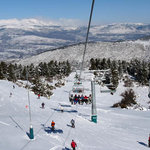 Masella