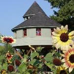 Sunflowers & our accesible to all tree house, in the Children's Garden.