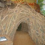  Big beaver house for kids to play around.