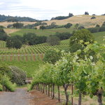 Wine Country Journeys LLC