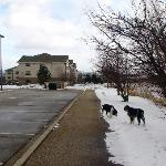 Foto Extended Stay America - Chicago - Buffalo Grove - Deerfield