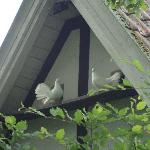 The Romantik Hotel Hof zur Linde, a perfect place for turtle doves