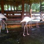  pink flamingos at treasure cove ranch