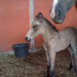  birth of a baby horse at reasure cove ranch
