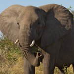 Elephants from Lodge