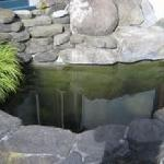  algae pond