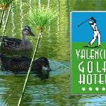  Hotel Valencia Golf - Patitos