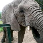  Visit the Knysna elephant sanctuary