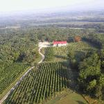 Summerset Winery Vineyards
