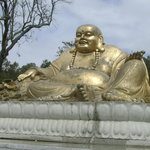The Golden Laughing Buddha