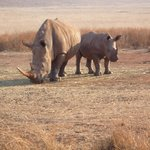 Photo of Lion and Rhino Nature Reserve