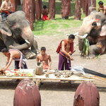 Elephants and mahouts re-enacting thousands of years of tradition.