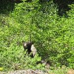 bear cub seen whilst leaving the ranch