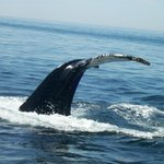 ‪Granite State Whale Watch, Inc.‬
