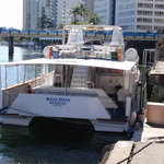Whales in Paradise - Gold Coast Whale Watching Pty Ltd