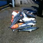  Fish from one of the boats