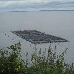 salmon farming on the lake