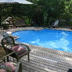Dolphin Swimming Pool From Cottage