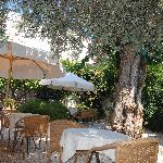 Breakfast at Orloff under the blueberry tree