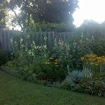  Backyard/Garden picture 3