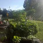  Backyard/Garden picture 5
