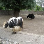Almaty Zoo