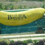  Big Banana