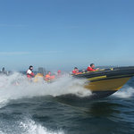 Sea Safari Tours
