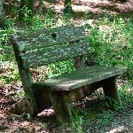 bench on path to water