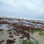 Seaweed, seaweed, everywhere