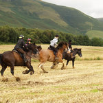 Cumbrian Heavy Horses