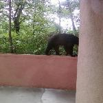  Bear outside my room