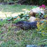  Groundhog on the motel grounds
