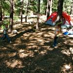 Pineknot Campground resmi