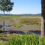 View of tidal flats from the B & B