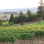 Foto de Yamhill Vineyards Bed & Breakfast