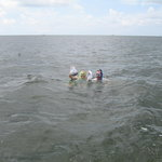 Snorkeling for scallops in the Gulf