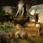 Museum of Natural History (Museum d'Histoire naturelle)