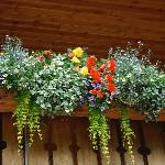 Flower Boxes along the railing