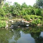Fish Pond Overlooked from Restaurant
