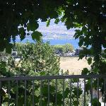  the view and the grape vines