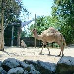 Camels looked healthy and happy.