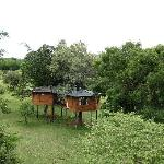 The treehouses