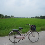 the sightseeing - local rice paddies