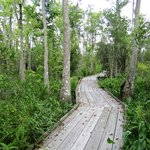 ‪Jean Lafitte National Historical Park and Preserve‬