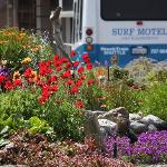 Surf Motel and Gardens Foto