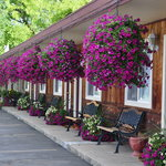 Flowers in August in front of motel