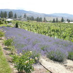 Okanagan Lavender Herb Farm
