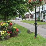 Sedgefield in bloom