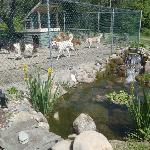  Fish pond by the dogs